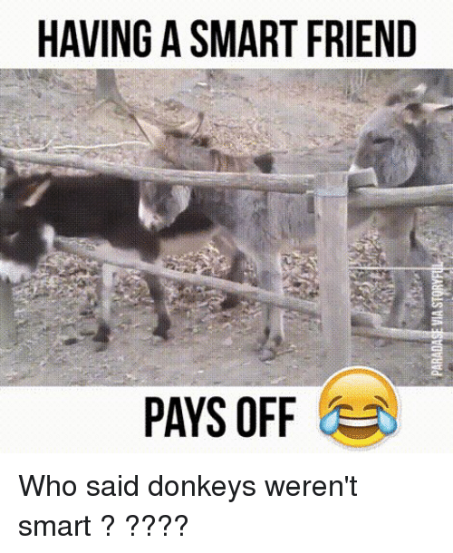 Funny, Who, and Smart: HAVING A SMART FRIEND  PAYS OFF Who said donkeys weren't smart ? ????