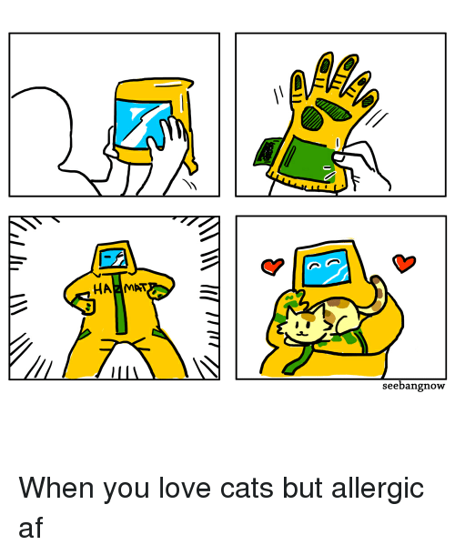 Cats, Comics, and  Love Cats: HAZMAT  seebangnowy When you love cats but allergic af