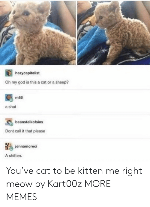 Cat To Be Kitten Me: hazycapitalist  Oh my god is this a cat or a sheep?  m86  a shat  beanstalkofsins  Dont call it that please  jennamoreci  A shitten. You've cat to be kitten me right meow by Kart00z MORE MEMES
