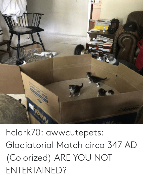 Match: hclark70: awwcutepets: Gladiatorial Match circa 347 AD (Colorized)  ARE YOU NOT ENTERTAINED?