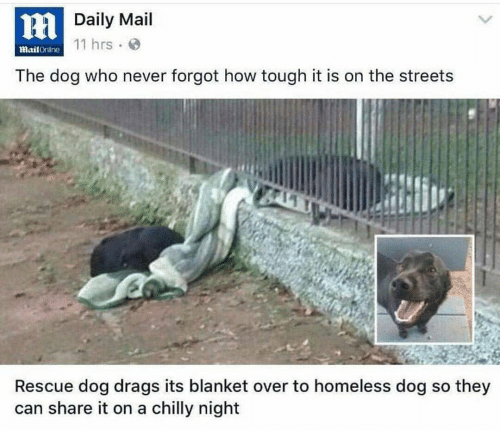 rescue dog: HDaily Mail  11 hrs  MailOnline  The dog who never forgot how tough it is on the streets  Rescue dog drags its blanket over to homeless dog so they  can share it on a chilly night