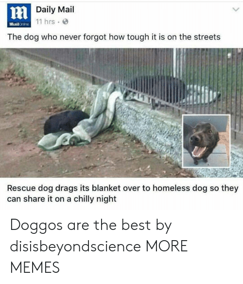 rescue dog: HDaily Mail  mail Crililne 11 hrs.  The dog who never forgot how tough it is on the streets  Rescue dog drags its blanket over to homeless dog so they  can share it on a chilly night Doggos are the best by disisbeyondscience MORE MEMES