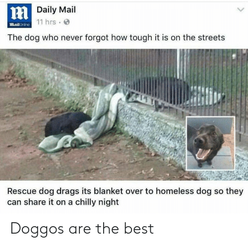rescue dog: HDaily Mail  mail Crililne 11 hrs.  The dog who never forgot how tough it is on the streets  Rescue dog drags its blanket over to homeless dog so they  can share it on a chilly night Doggos are the best