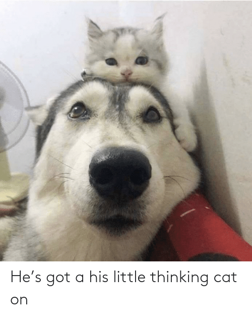 Thinking Cat: He's got a his little thinking cat on
