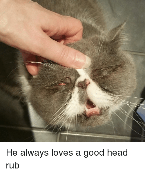 Funny, Head, and Good: He always loves a good head rub