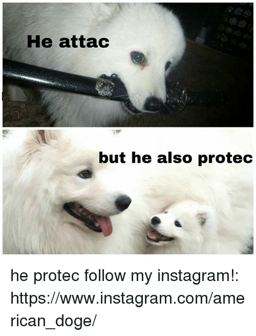 Dogee: He attac  but he also protec he protec follow my instagram!: https://www.instagram.com/american_doge/