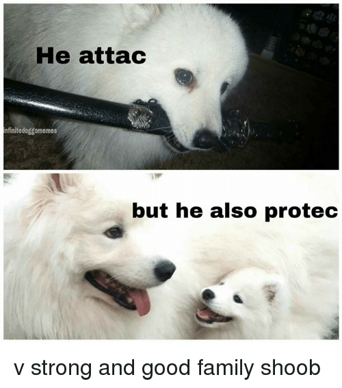 He Attac Nfinitedoggomemes but He Also Protec v Strong and ...
