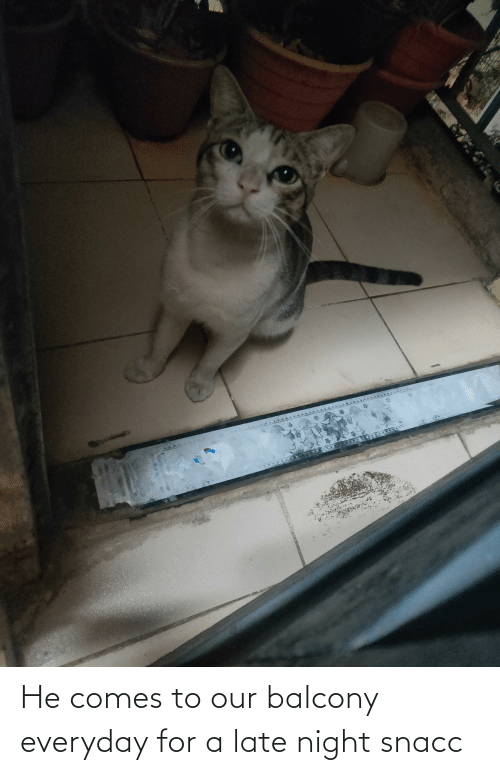 late night: He comes to our balcony everyday for a late night snacc