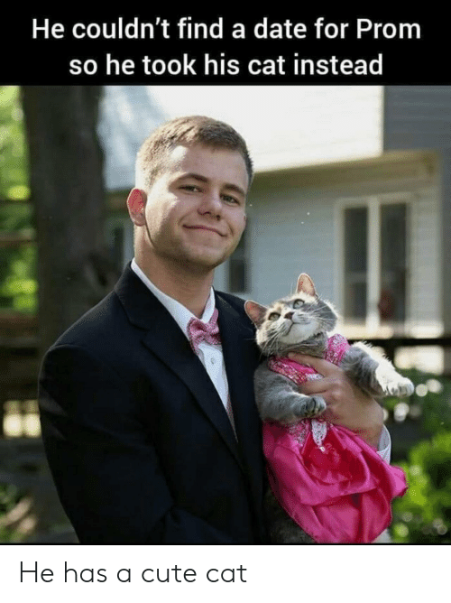 cute cat: He couldn't find a date for Prom  so he took his cat instead He has a cute cat