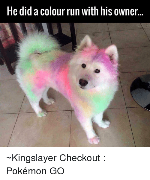 Dank, Pokemon, and Run: He did a colour run with his owner ~Kingslayer  Checkout : Pokémon GO