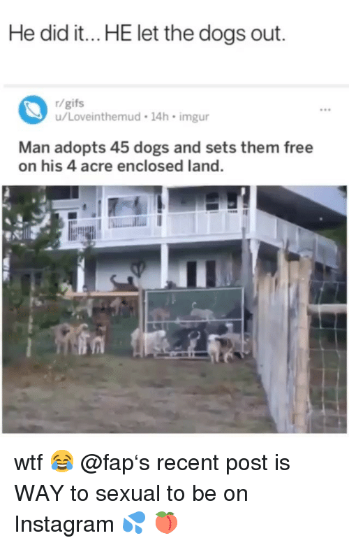 Dogs, Instagram, and Memes: He did it...HE let the dogs out.  r/gifs  u/Loveinthemud 14h imgur  9e  Man adopts 45 dogs and sets them free  on his 4 acre enclosed land. wtf 😂 @fap's recent post is WAY to sexual to be on Instagram 💦 🍑
