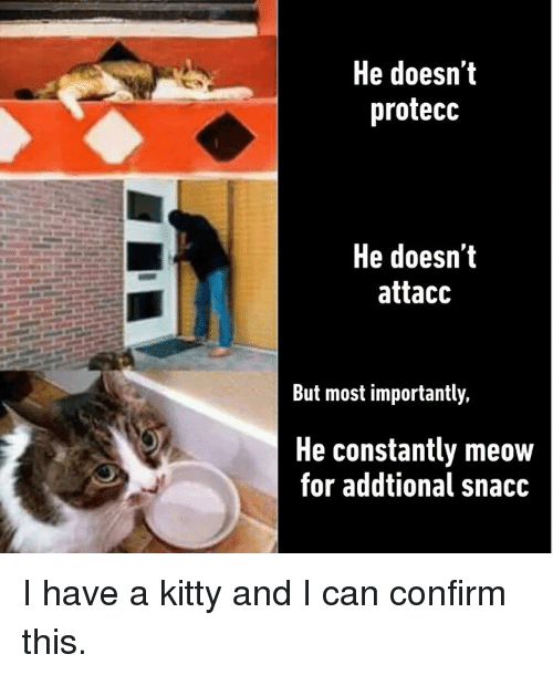 Dank, 🤖, and Can: He doesn'it  protecc  He doesn't  attacc  But most importantly,  He constantly meow  for addtional snacc I have a kitty and I can confirm this.
