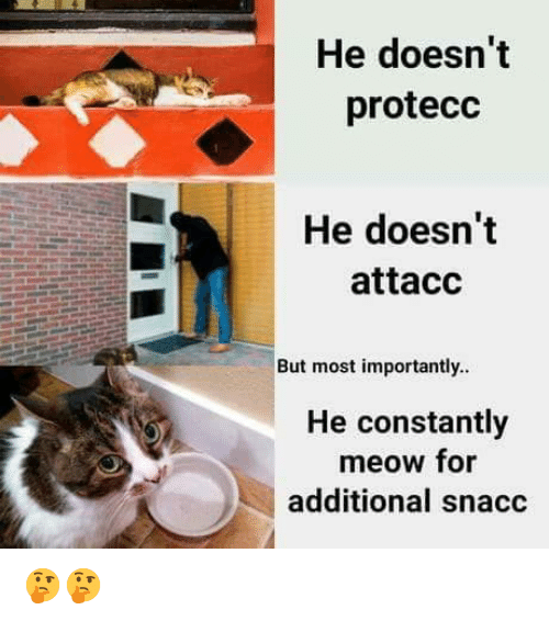Memes, 🤖, and For: He doesn't  protecc  He doesn't  attacc  But most importantly..  He constantly  meow for  additional snacc 🤔🤔
