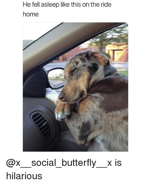 Funny, Butterfly, and Home: He fell asleep like this on the ride  home @x__social_butterfly__x is hilarious