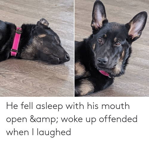 Laughed: He fell asleep with his mouth open & woke up offended when I laughed