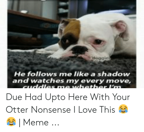 otter nonsense: He follows me like a shadow  and watches my every move, Due Had Upto Here With Your Otter Nonsense I Love This 😂😂   Meme ...
