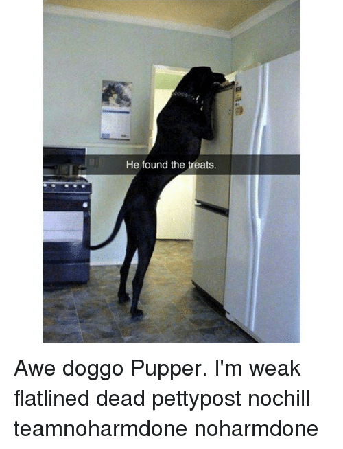 Memes, 🤖, and Doggo: He found the treats. Awe doggo Pupper. I'm weak flatlined dead pettypost nochill teamnoharmdone noharmdone