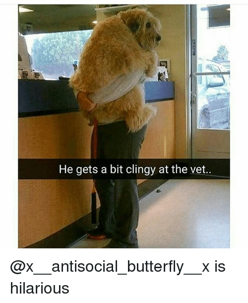 Funny, Butterfly, and Antisocial: He gets a bit clingy at the vet.. @x__antisocial_butterfly__x is hilarious