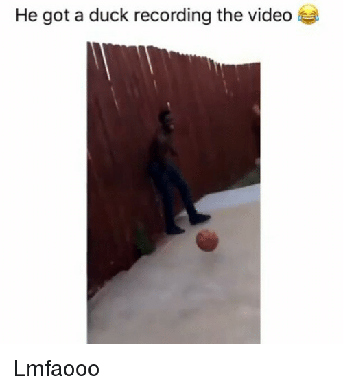 Memes, Duck, and Video: He got a duck recording the video Lmfaooo