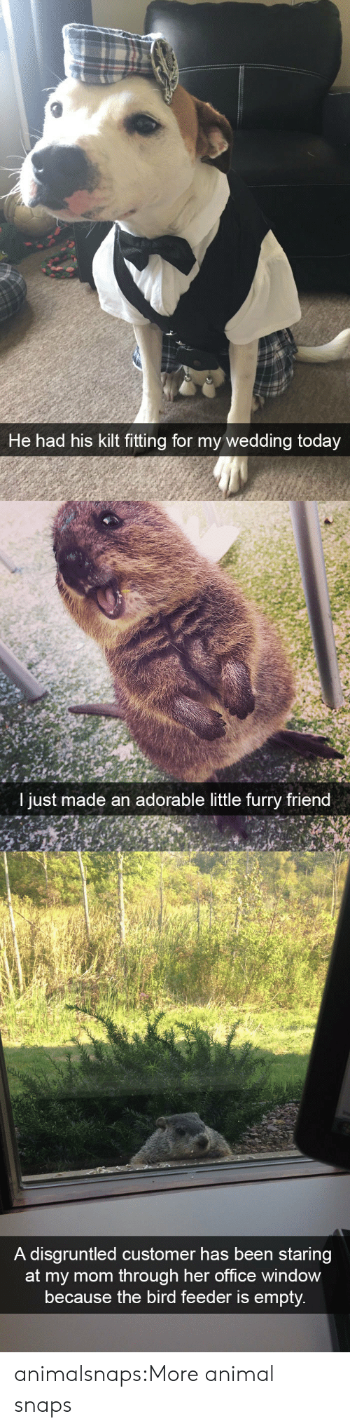 feeder: He had his kilt fitting for my wedding today   I just m  ade an adorable little furry friend   A disgruntled customer has been staring  om through her office window  because the bird feeder is empty animalsnaps:More animal snaps