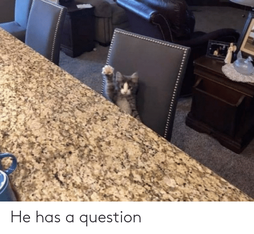 He Has: He has a question