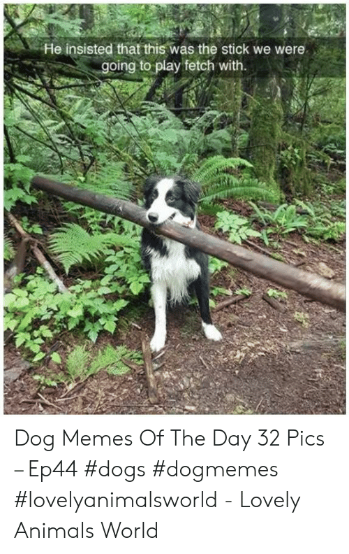 insisted: He insisted that this was the stick we were  going to play fetch with. Dog Memes Of The Day 32 Pics – Ep44 #dogs #dogmemes #lovelyanimalsworld - Lovely Animals World