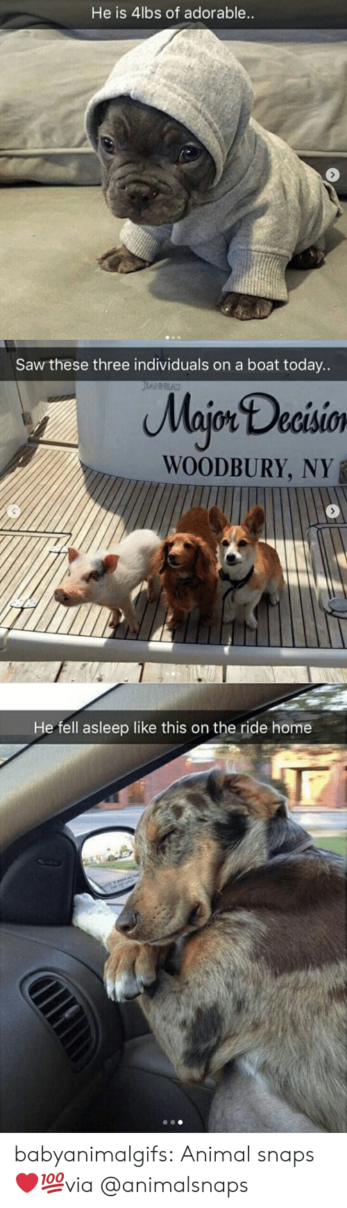 ride: He is 4lbs of adorable   Saw these three individuals on a boat today..  Majon Decisio  WOODBURY, NY   He fell asleep like this on the ride home babyanimalgifs:  Animal snaps ❤💯via @animalsnaps