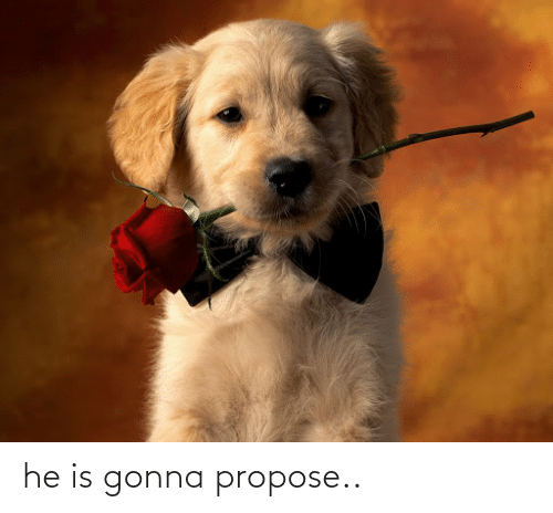 propose: he is gonna propose..