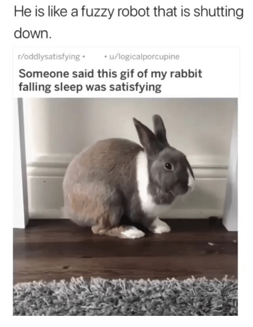 fuzzy: He is like a fuzzy robot that is shutting  down  r/oddlysatisfying  Someone said this gif of my rabbit  falling sleep was satisfying  u/logicalporcupine