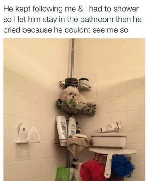 Memes, Shower, and 🤖: He kept following me & had to shower  so I  let him stay in the bathroom then he  cried because he couldnt see me so