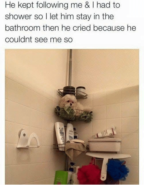 Shower, Him, and Following: He kept following me & I had to  shower so I let him stay in the  bathroom then he cried because he  couldnt see me so