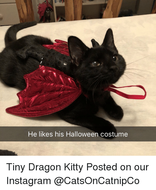 Halloween, Instagram, and Memes: He likes his Halloween costume Tiny Dragon Kitty  Posted on our Instagram @CatsOnCatnipCo