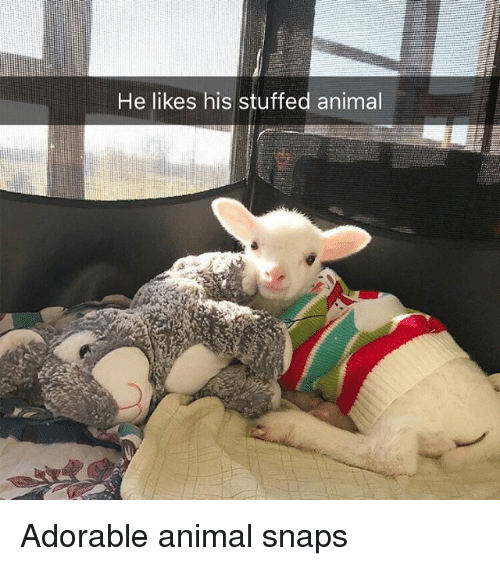 Funny, Animal, and Adorable: He likes his stuffed animal Adorable animal snaps