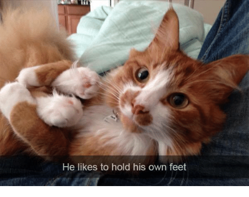 Memes, 🤖, and Feet: He likes to hold his own feet