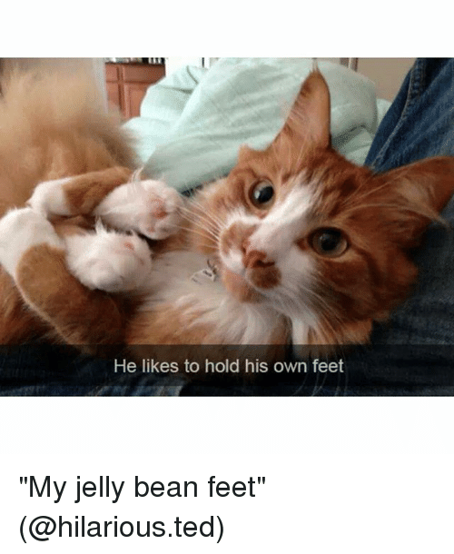 "Funny, Ted, and Hilarious: He likes to hold his own feet ""My jelly bean feet"" (@hilarious.ted)"