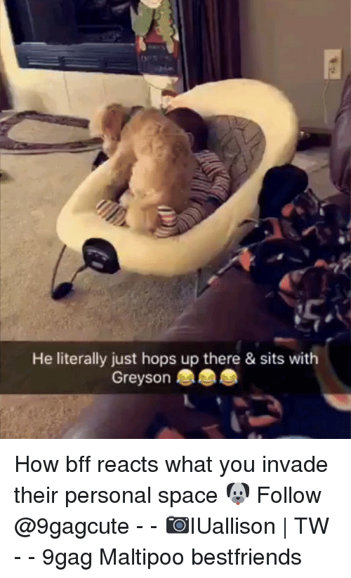 9gag, Memes, and Space: He literally just hops up there & sits with  Greyson How bff reacts what you invade their personal space 🐶 Follow @9gagcute - - 📷IUallison | TW - - 9gag Maltipoo bestfriends