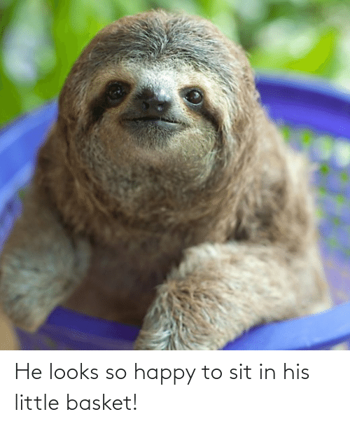 Sit In: He looks so happy to sit in his little basket!