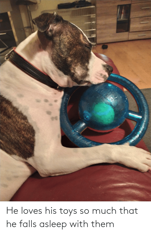 Toys: He loves his toys so much that he falls asleep with them