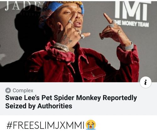 spider monkey: HE MONEY TEAM  Complex  Swae Lee's Pet Spider Monkey Reportedly  Seized by Authorities #FREESLIMJXMMI😭