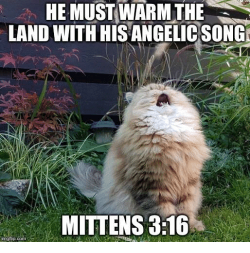 Angelic: HE MUST WARM THE  LAND WITH HIS ANGELIC SONG  MITTENS 3:16  imgilip.com