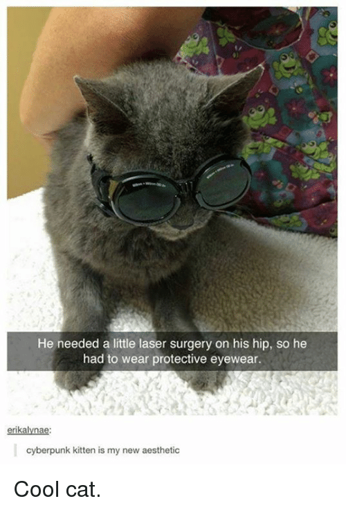 new-aesthetic: He needed a little laser surgery on his hip, so he  had to wear protective eyewear.  rik  cyberpunk kitten is my new aesthetic Cool cat.