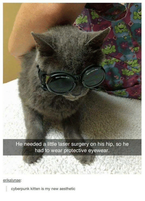 new-aesthetic: He needed a little laser surgery on his hip, so he  had to wear protective eyewear.  erikalyna  cyberpunk kitten is my new aesthetic