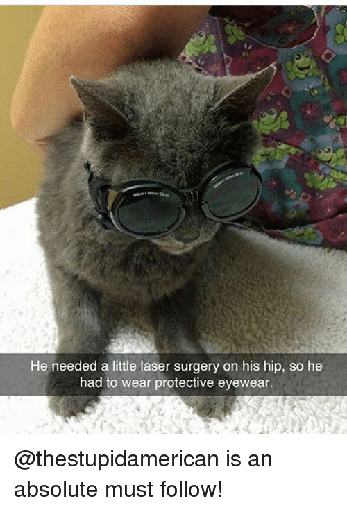 Memes, 🤖, and Laser: He needed a little laser surgery on his hip, so he  had to wear protective eyewear. @thestupidamerican is an absolute must follow!
