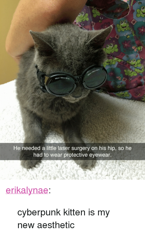 """new-aesthetic: He needed a little laser surgery on his hip, so he  had to wear protective eyewear. <p><a href=""""http://erikalynae.tumblr.com/post/97926771951/cyberpunk-kitten-is-my-new-aesthetic"""" class=""""tumblr_blog"""" target=""""_blank"""">erikalynae</a>:</p><blockquote><p>cyberpunk kitten is my new aesthetic</p></blockquote>"""