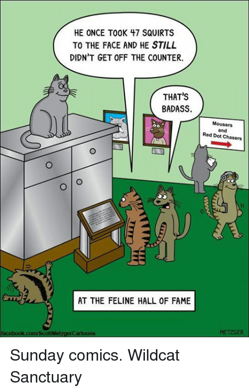 Memes, Squirt, and Sunday: HE ONCE TOOK 47 SQUIRTS  TO THE FACE AND HE STILL  DIDN'T GET OFF THE COUNTER.  THAT'S  BADASS.  AT THE FELINE HALL OF FAME  facebook.com/ScottMetzgerCartoons  Mousers  and  Red Dot Chasers Sunday comics. Wildcat Sanctuary
