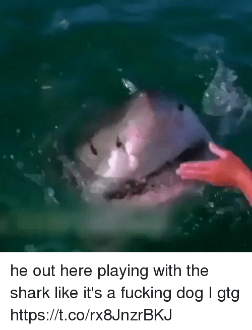 sharking: he out here playing with the shark like it's a fucking dog I gtg https://t.co/rx8JnzrBKJ
