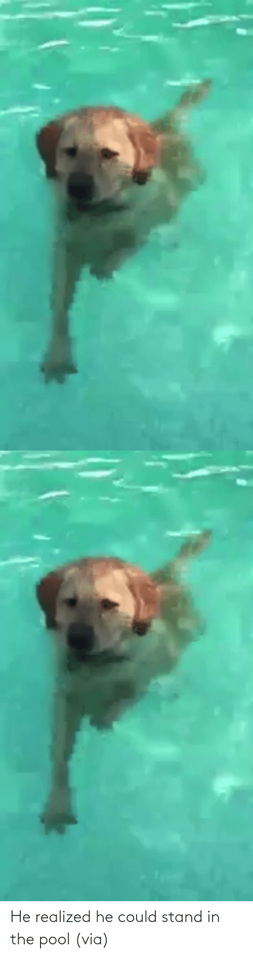 Could: He realized he could stand in the pool (via)
