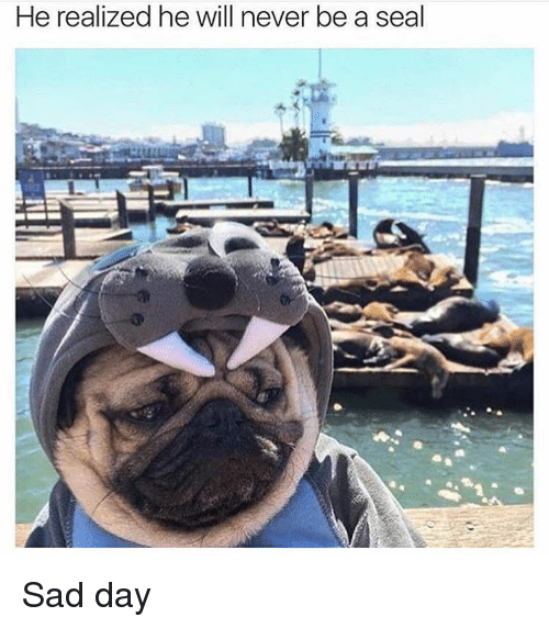Ironic: He realized he will never be a  seal  L Sad day