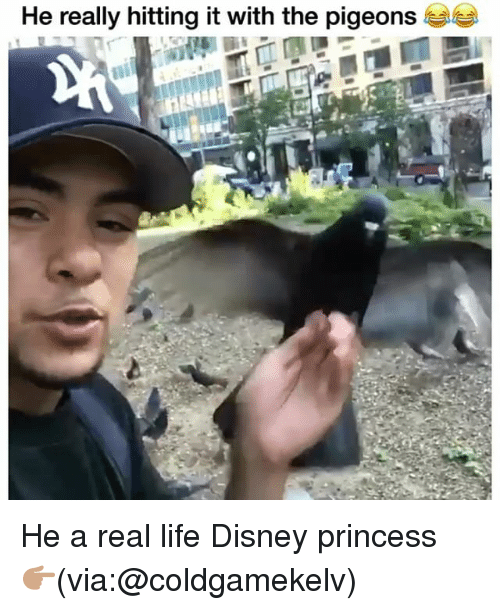 Disney, Funny, and Life: He really hitting it with the pigeons He a real life Disney princess 👉🏽(via:@coldgamekelv)