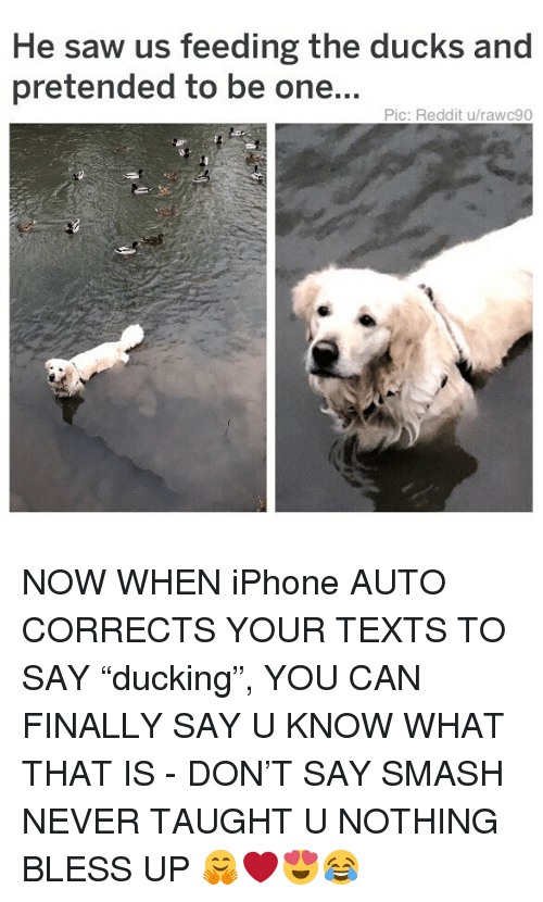 """Bless Up, Iphone, and Memes: He saw us feeding the ducks and  pretended to be one...  Pic: Reddit u/rawc90 NOW WHEN iPhone AUTO CORRECTS YOUR TEXTS TO SAY """"ducking"""", YOU CAN FINALLY SAY U KNOW WHAT THAT IS - DON'T SAY SMASH NEVER TAUGHT U NOTHING BLESS UP 🤗❤️😍😂"""
